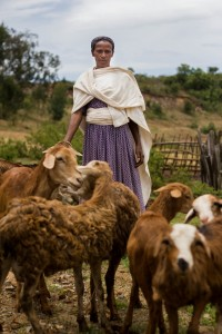Belinesh Benti of Bila is one of the women who have participated in a savings and loan group, and got the money to buy their own goats. It gives money to buy things like school uniforms and exercise books for children.